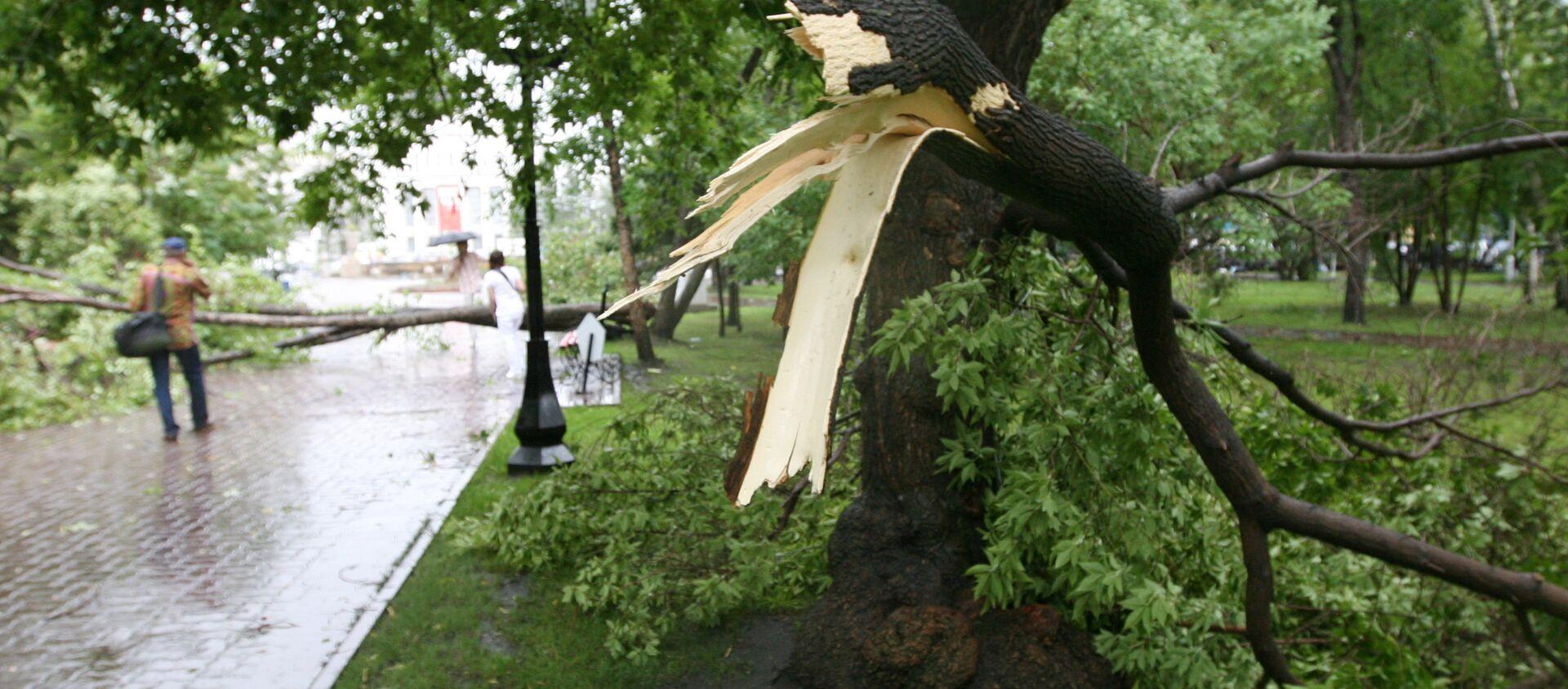 Гроза с сильным ветром и дождем прошла в Новосибирске - Sputnik Грузия, 1920, 10.05.2021