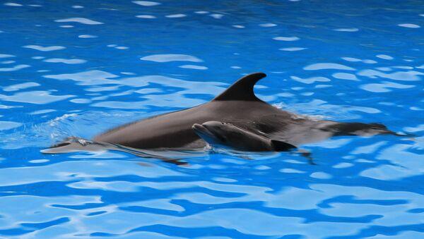 ახალშობილი დელფინი ბათუმის დელფინარიუმში - Sputnik საქართველო