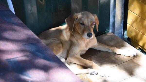 Приют для бездомных животных - Sputnik Грузия
