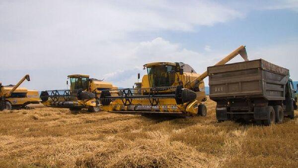 В Кахети началась уборка урожая пшеницы - Sputnik Грузия