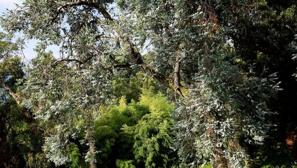 Батумский Ботанический сад - Sputnik Грузия