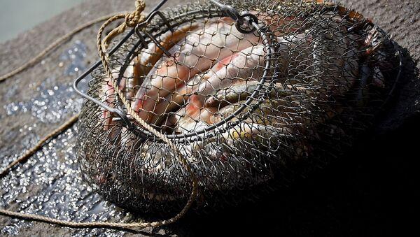 თევზაობის ნადავლი - Sputnik საქართველო