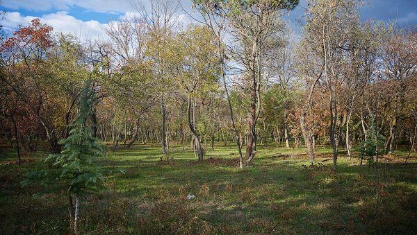 Лес у озера Лиси - Sputnik Грузия