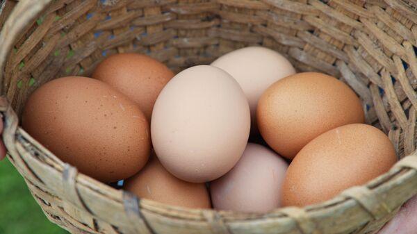 კვერცხი კალათაში - Sputnik საქართველო