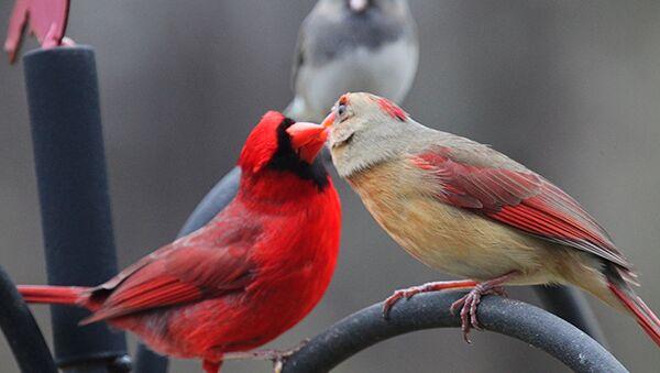 შეყვარებული ჩიტები - Sputnik საქართველო