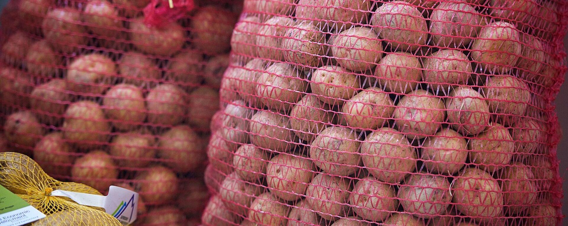 Картофель грузинского производства, подготовленный к продаже - Sputnik Грузия, 1920, 03.09.2021