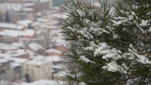 თოვლი ხეებზე - Sputnik საქართველო