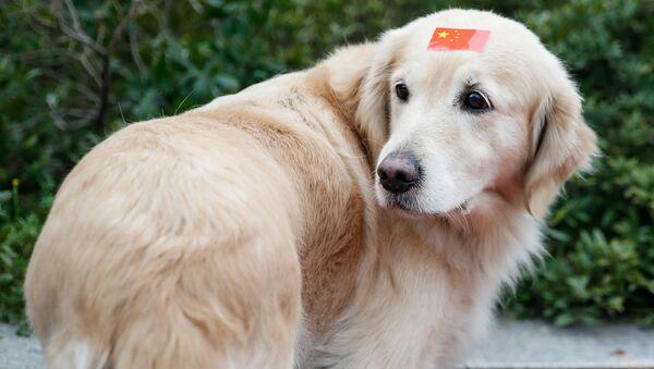 ძაღლი შუბლზე მიკრული ჩინეთის დროშით - Sputnik საქართველო