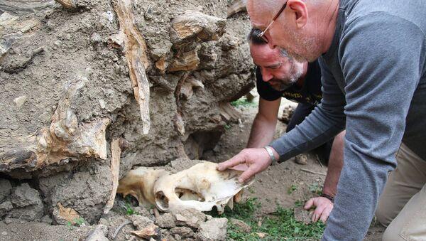 Директор Тбилисского зоопарка Зураб Гуриелидзе - Sputnik Грузия