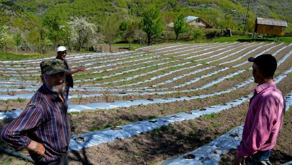აჭარის სოფლის, ბუთურაულის ფერმერები - Sputnik საქართველო
