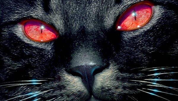 შავი კატა - Sputnik საქართველო