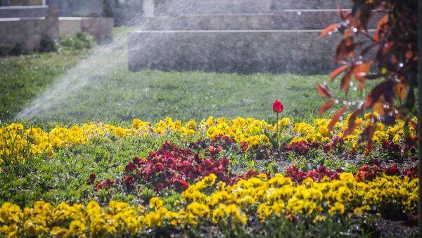 ყვავილების მორწყვა რიყის პარკში - Sputnik საქართველო