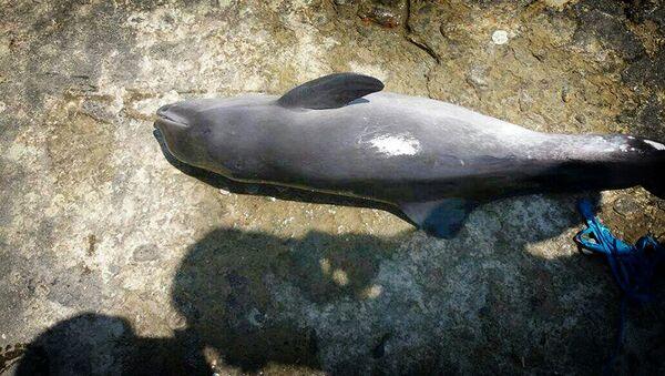 დაღუპული დელფინი - Sputnik საქართველო
