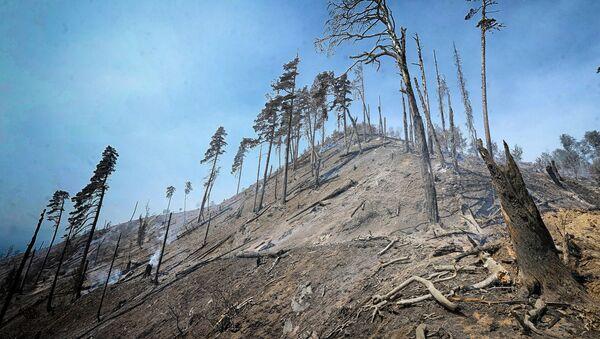 დამწვარი ხეები ბორჯომ-ხარაგაულის ტყეში - Sputnik საქართველო