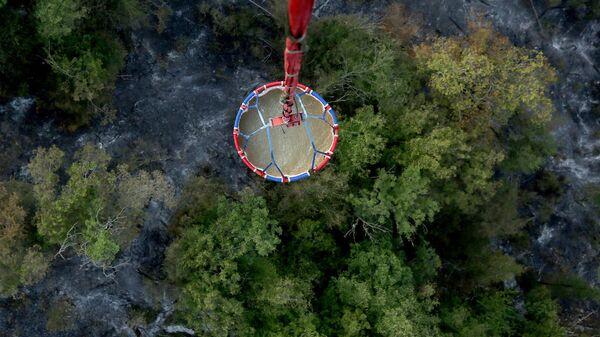 ხანძარი ბორჯომ-ხარაგაულის ტყე-პარკში - Sputnik საქართველო