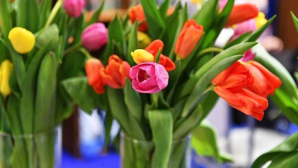 Букеты тюльпанов - Sputnik Грузия