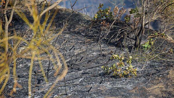 Последствия пожара на горе Мтацминда - Sputnik Грузия