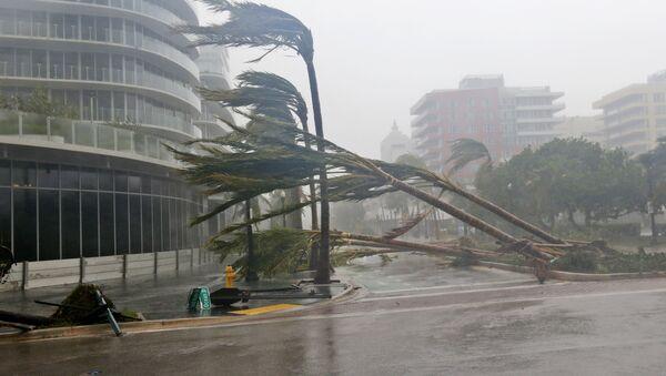 Поваленные ураганом Ирма деревья в Майами, Флорида - Sputnik Грузия