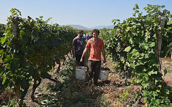 Археологи установили, что вино в Грузии делали еще в эпоху неолита - Sputnik Грузия