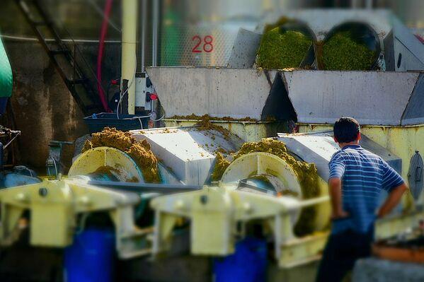В Национальном агентстве вина министерства сельского хозяйства Грузии ожидают, что винные компании в этом году примут до 150 тысяч тонн винограда. В прошлом году на переработку было принято 118 тысяч тонн - Sputnik Грузия