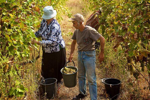 У каждой семьи — свой секрет изготовления вина, который передается из поколения в поколение - Sputnik Грузия
