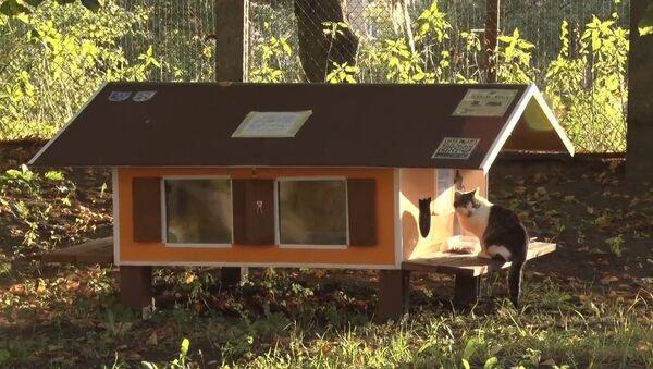 ათობით პატარა სახლი უპატრონო კატებისთვის რიგაში - Sputnik საქართველო