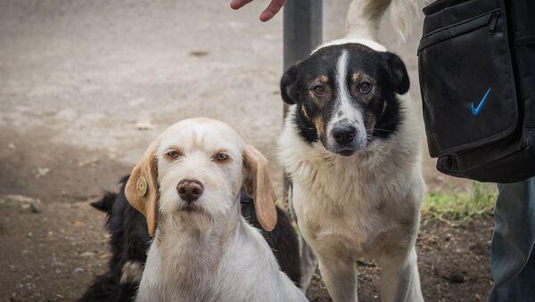 Собаки, за которыми присматривает Павел Джураев - Sputnik Грузия