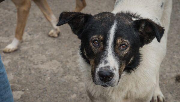ძაღლი - Sputnik საქართველო