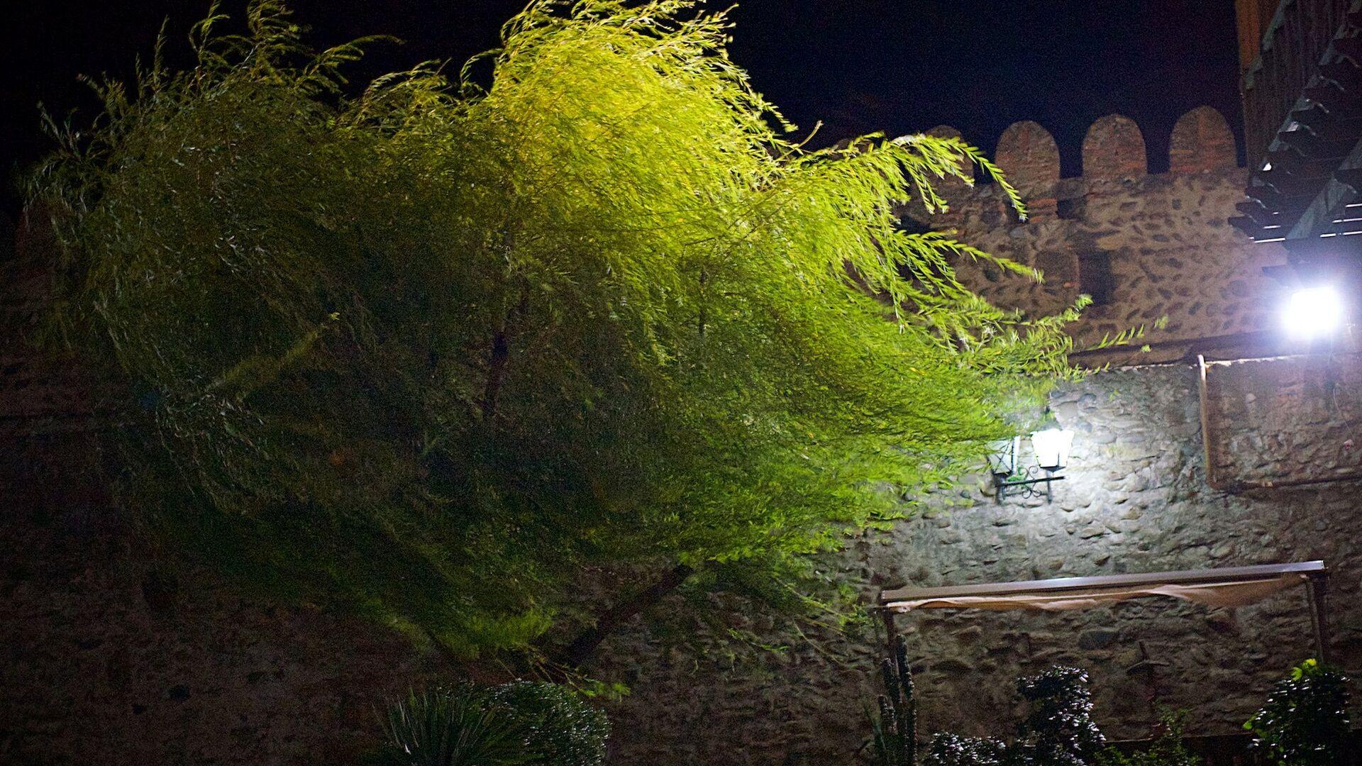 Дерево во время сильного ветра в городе Мцхета - Sputnik Грузия, 1920, 03.09.2021