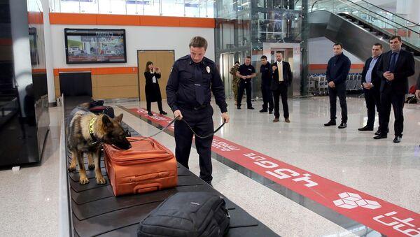 სამომსახურეო ძაღლი თბილისის აეროპორტში - Sputnik საქართველო
