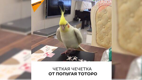 ტოტოროს სტეპი - Sputnik საქართველო