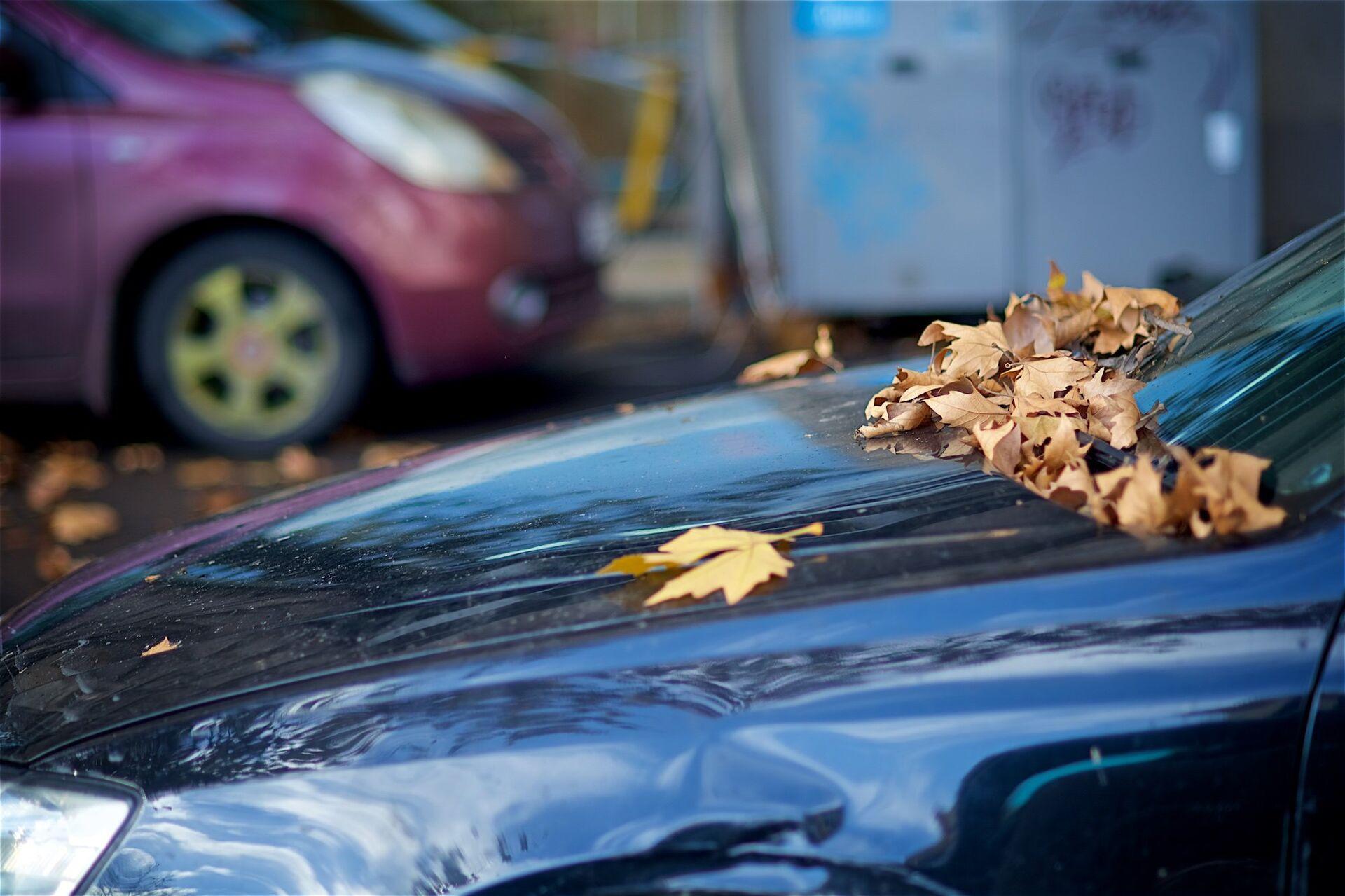 Опавшие листья на капоте машины - Sputnik Грузия, 1920, 22.09.2021