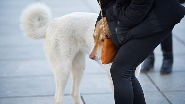 გოგონა და ქუჩის ძაღლი - Sputnik საქართველო