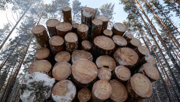 მოჭრილი ხეები ტყეში - Sputnik საქართველო