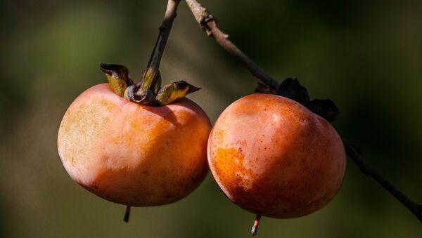 Хурма на дереве - Sputnik Грузия