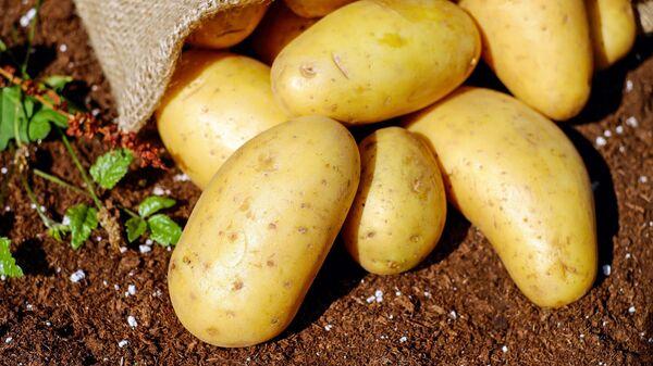 Клубни картофеля - Sputnik Грузия
