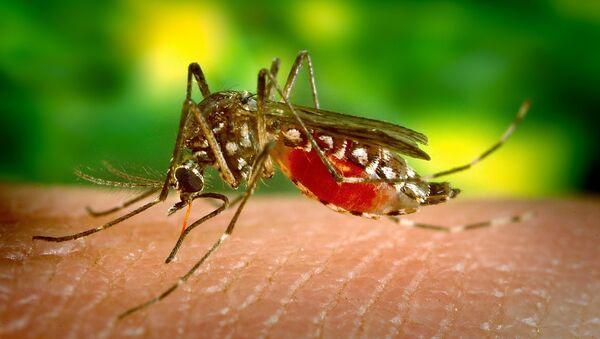 მალარიის კოღო - Sputnik საქართველო