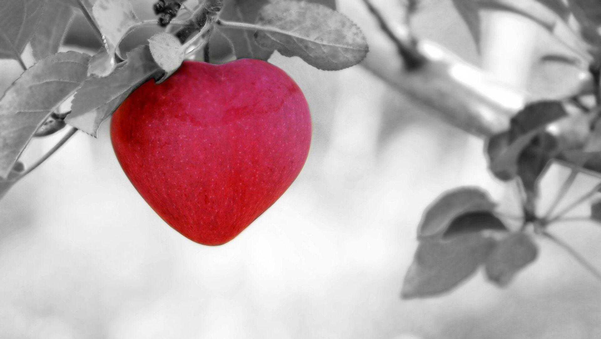 გულის ფორმის ვაშლი - Sputnik საქართველო, 1920, 06.07.2021
