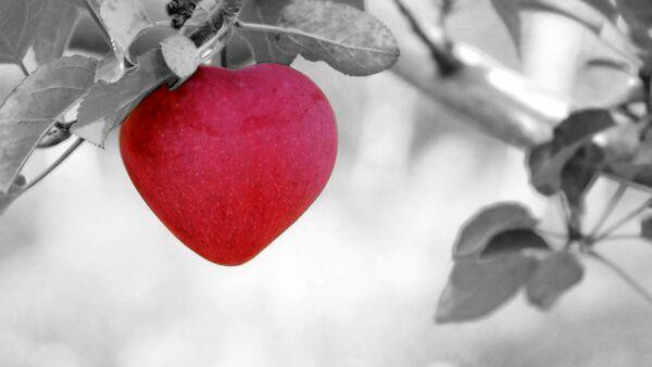 გულის ფორმის ვაშლი - Sputnik საქართველო
