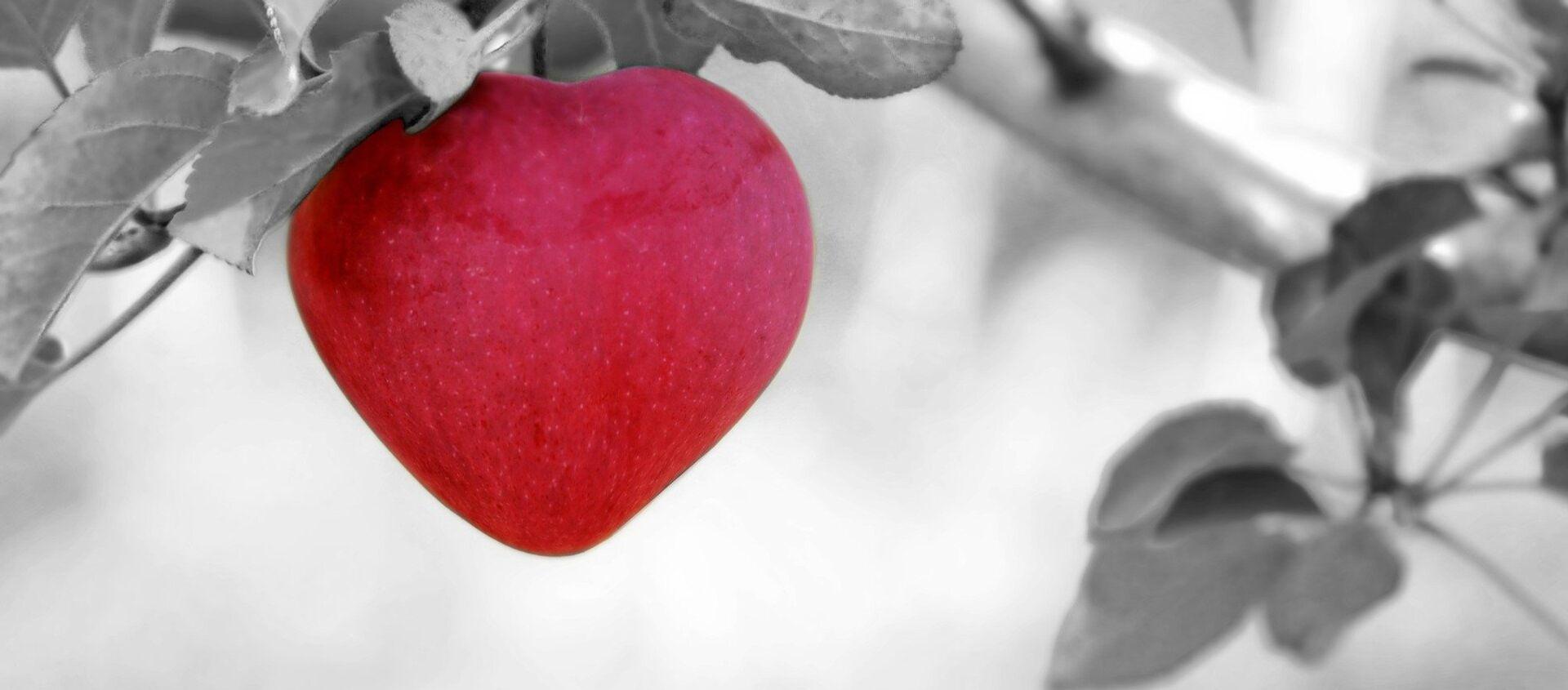 გულის ფორმის ვაშლი - Sputnik საქართველო, 1920, 19.08.2021