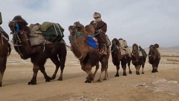 На верблюдах из Улан-Батора в Лондон: кадры необычного путешествия - Sputnik Грузия