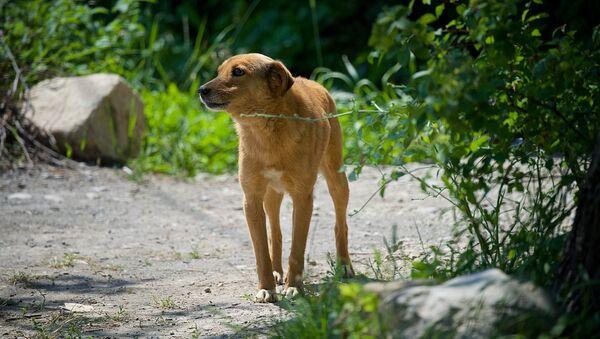 Бродячая собака в селе в регионе Шида Картли - Sputnik Грузия