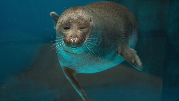 ოკეანოგრაფიის და ზღვის ბიოლოგიის ცენტრი მოსკოვში - Sputnik საქართველო