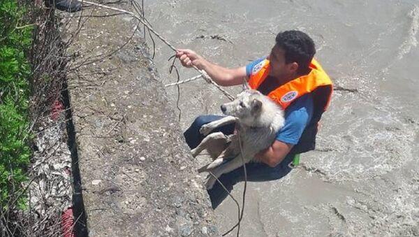 Хаски вызволили из реки в Тбилиси - Sputnik Грузия