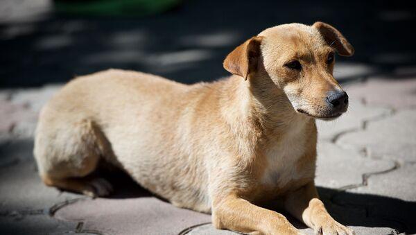 Бездомная собака на улице - Sputnik Грузия