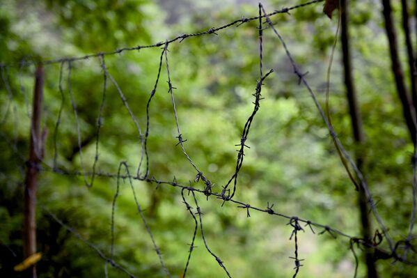 От проникновения диких зверей территорию защищает заграждение из колючей проволоки - Sputnik Грузия
