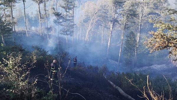 Пожар в лесу в Хашурском районе - Sputnik Грузия