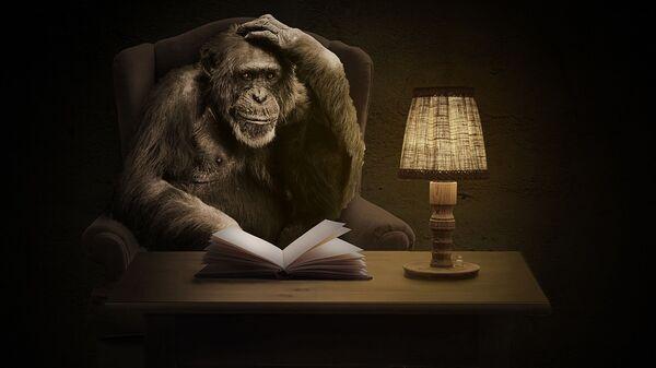 მაიმუნი წიგნით - Sputnik საქართველო
