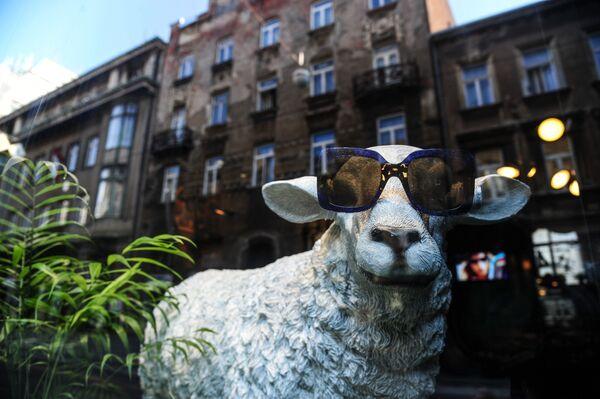 Даже просто гуляя по улицам Загреба, турист может встретить много забавного, необычного и интересного. На фото - витрина одного из городских магазинов - Sputnik Грузия