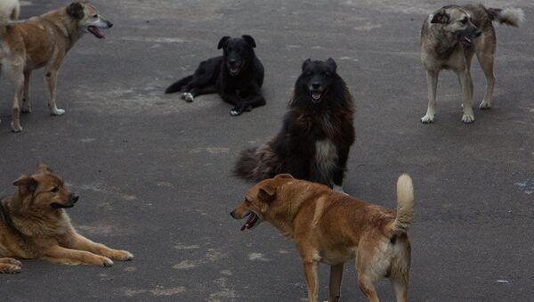 მიუსაფარი ძაღლები - Sputnik საქართველო